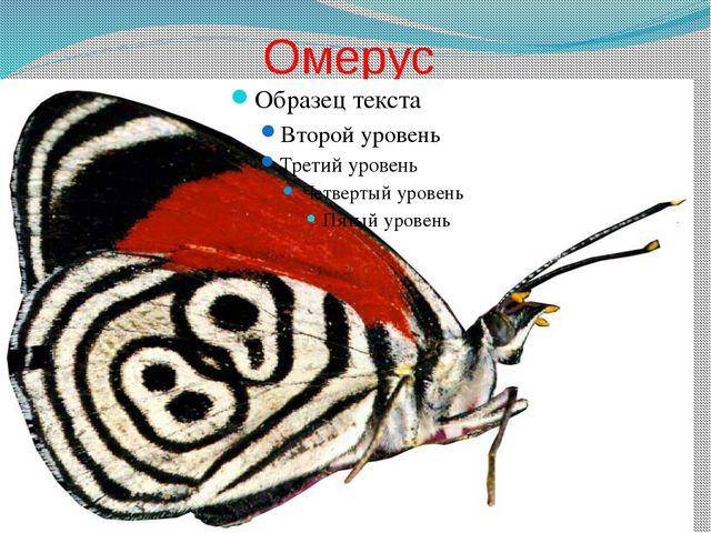 Омерус