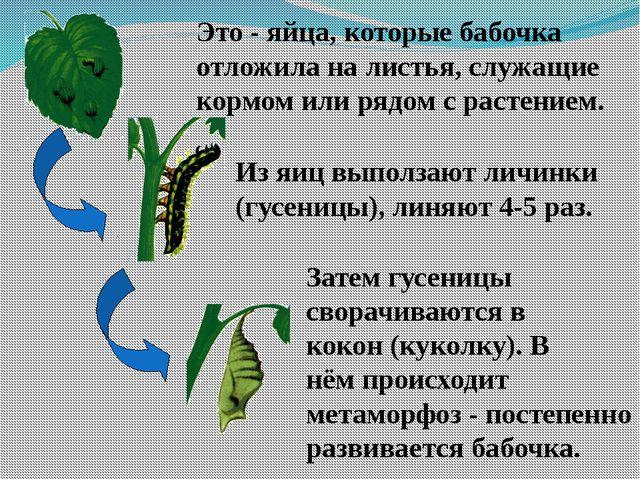 Это - яйца, которые бабочка отложила на листья, служащие кормом или рядом с р...