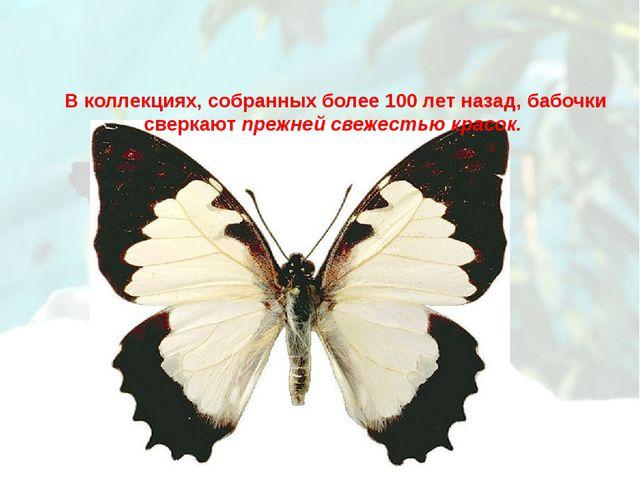 В коллекциях, собранных более 100 лет назад, бабочки сверкают прежней свежест...