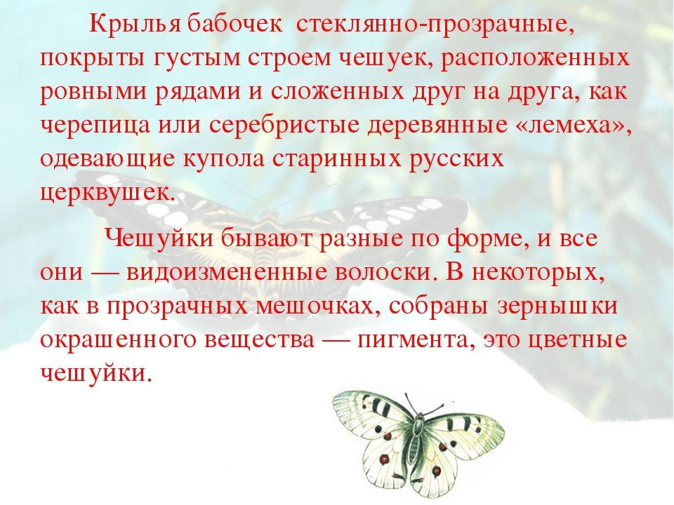 Крылья бабочек стеклянно-прозрачные, покрыты густым строем чешуек, расположе...
