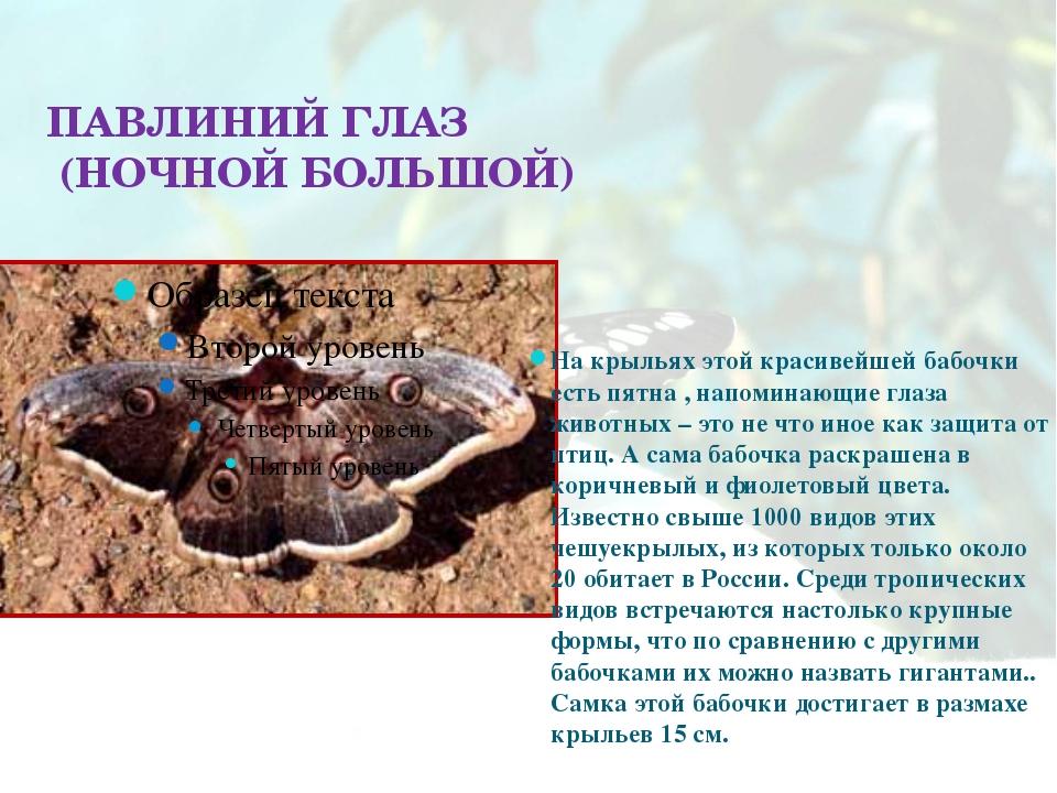 ПАВЛИНИЙ ГЛАЗ (НОЧНОЙ БОЛЬШОЙ) На крыльях этой красивейшей бабочки есть пятна...