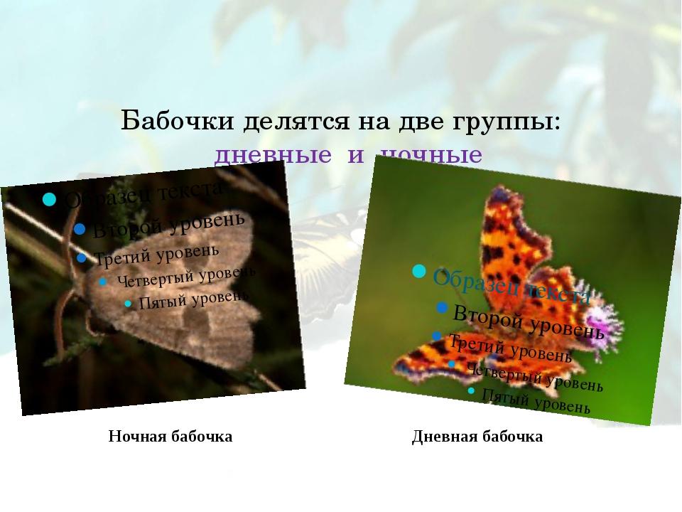 Бабочки делятся на две группы: дневные и ночные Ночная бабочка Дневная бабочка