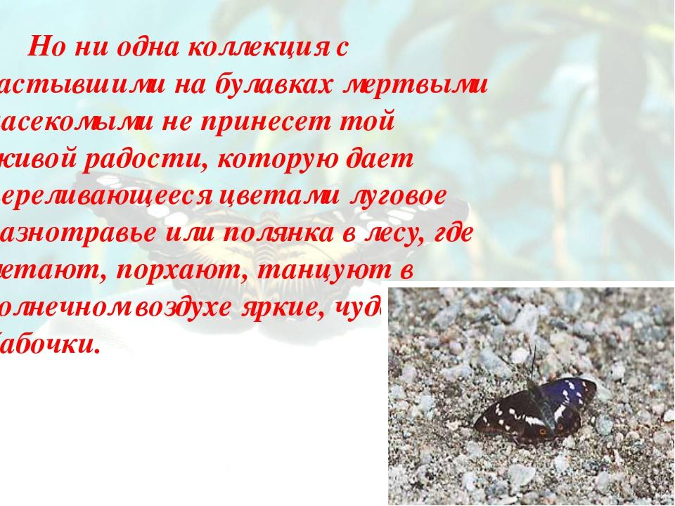 Но ни одна коллекция с застывшими на булавках мертвыми насекомыми не принесе...