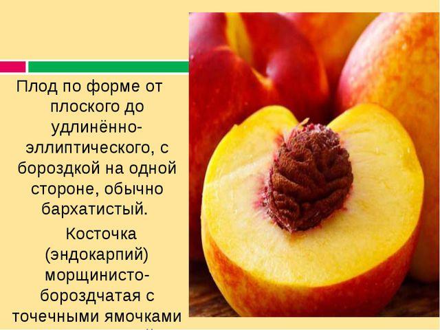 Плод по форме от плоского до удлинённо-эллиптического, с бороздкой на одной с...