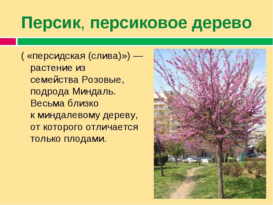 Персик,персиковое дерево ( «персидская (слива)»)— растение из семействаРо...