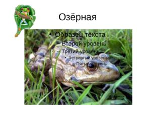 Озёрная
