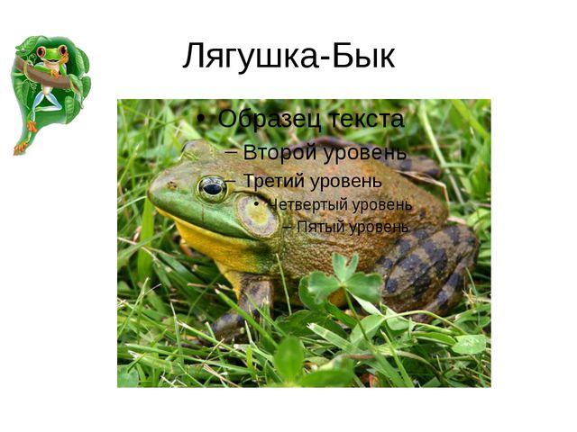 Лягушка-Бык