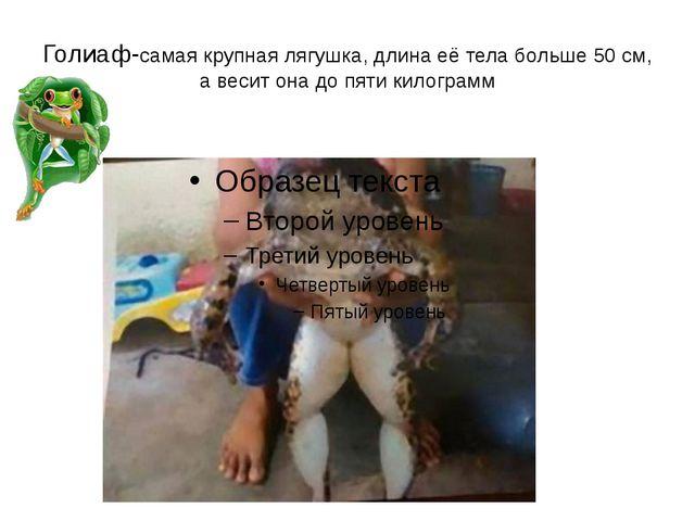 Голиаф-самая крупная лягушка, длина её тела больше 50 см, а весит она до пяти...