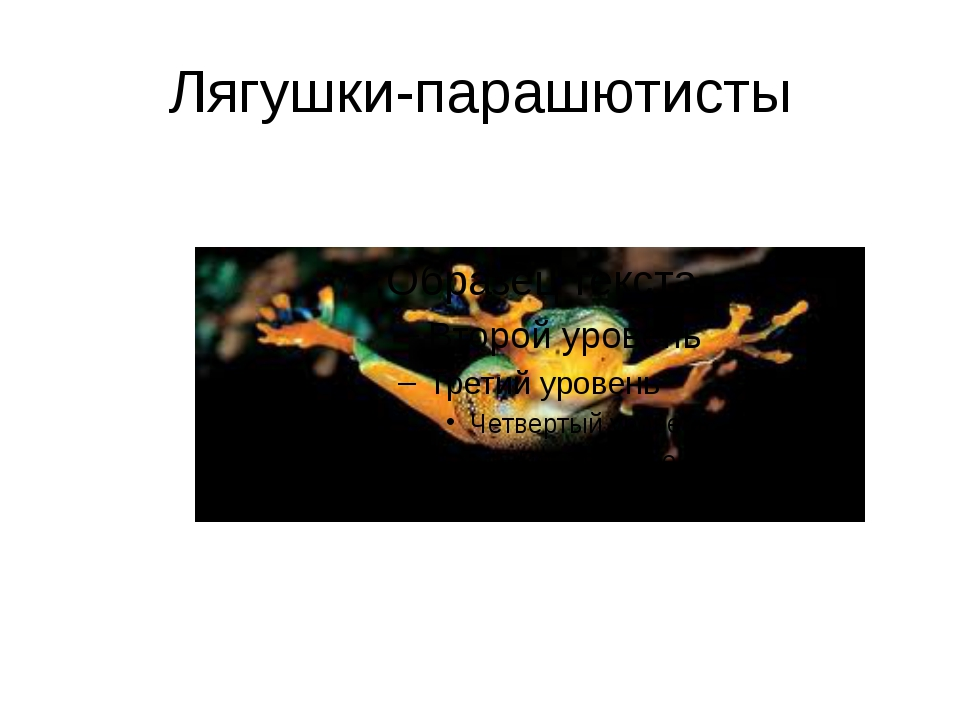 Лягушки-парашютисты