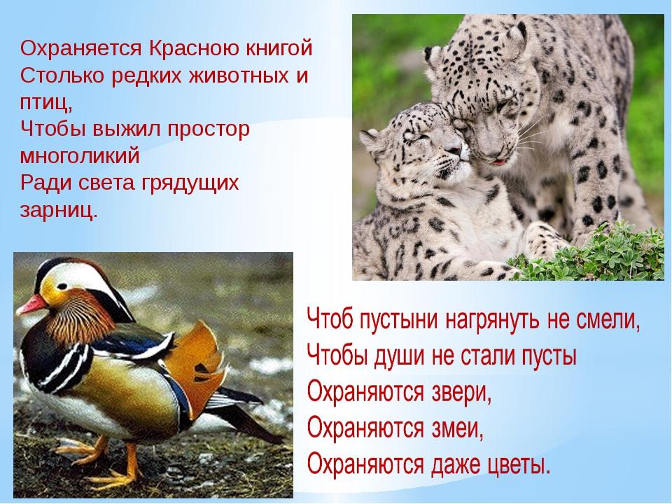 россии фото животных которые занесены в красную книгу самая эксклюзивная модель