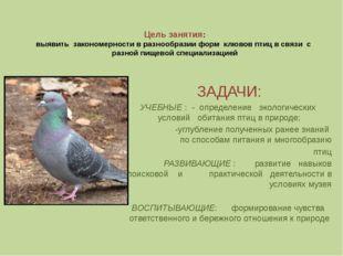 Цель занятия: выявить закономерности в разнообразии форм клювов птиц в связи