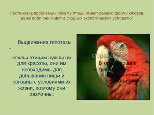 Постановка проблемы - почему птицы имеют разную форму клювов, даже если они ж