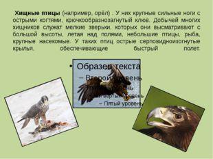 Хищные птицы (например, орёл) . У них крупные сильные ноги с острыми когтями