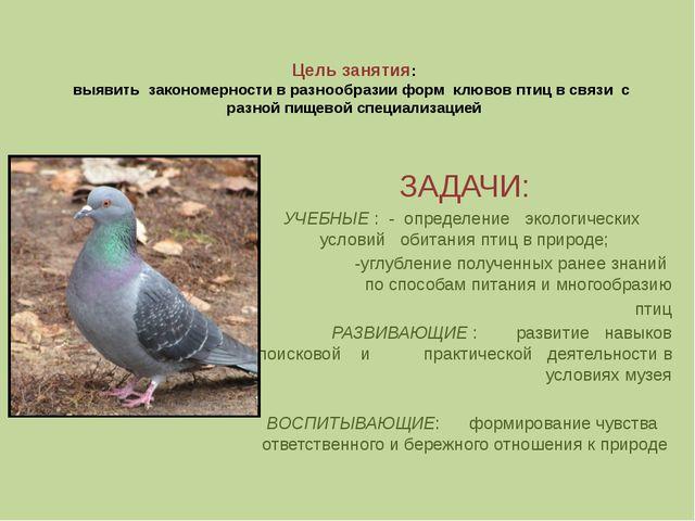 Цель занятия: выявить закономерности в разнообразии форм клювов птиц в связи...