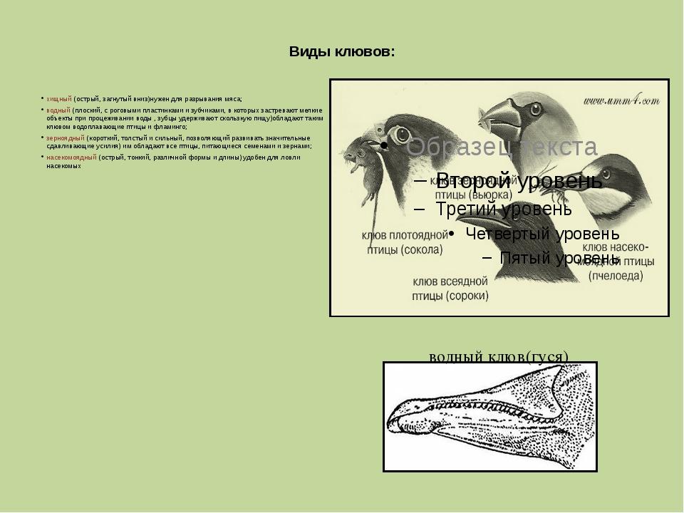 Виды клювов: хищный (острый, загнутый вниз)нужен для разрывания мяса; водный...
