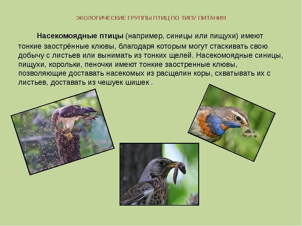 ЭКОЛОГИЧЕСКИЕ ГРУППЫ ПТИЦ ПО ТИПУ ПИТАНИЯ Насекомоядные птицы (например, сини...