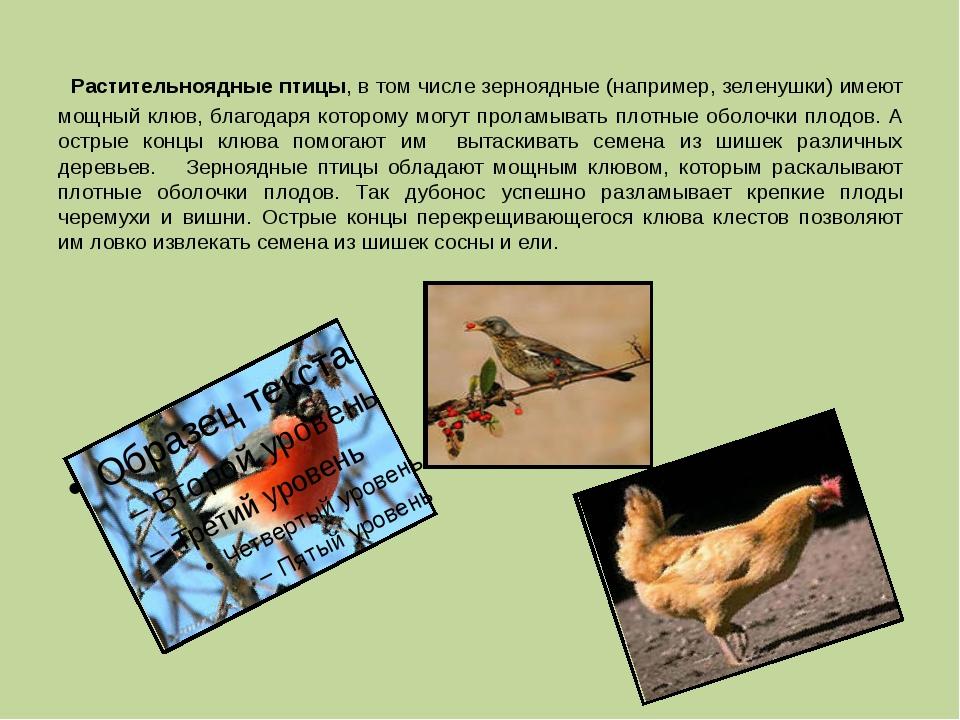 Растительноядные птицы, в том числе зерноядные (например, зеленушки) имеют м...
