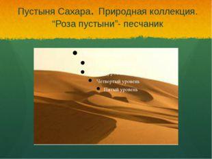 """Пустыня Сахара. Природная коллекция. """"Роза пустыни""""- песчаник"""