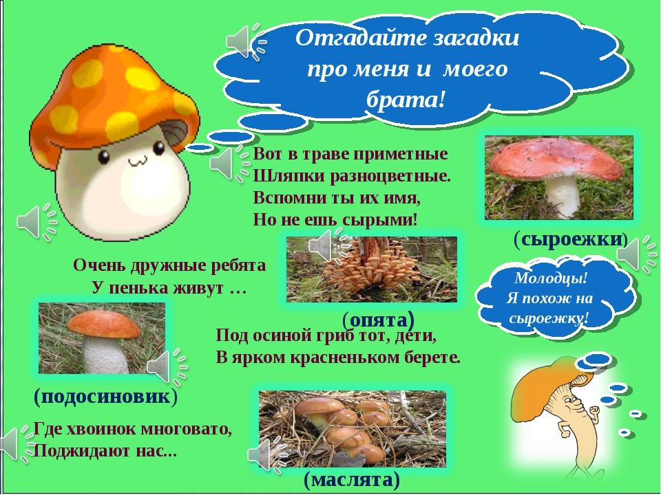 Вот в траве приметные Шляпки разноцветные. Вспомни ты их имя, Но не ешь сырым...