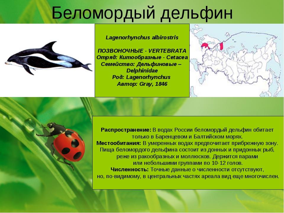 для список дельфинариев в россии снижает
