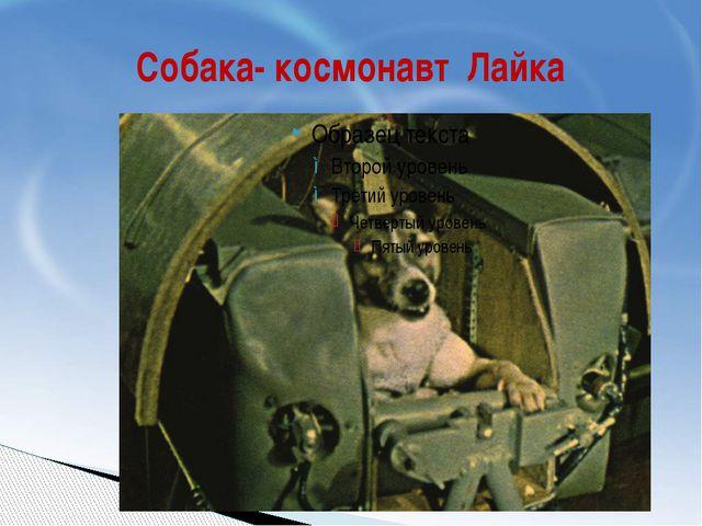 Собака- космонавт Лайка