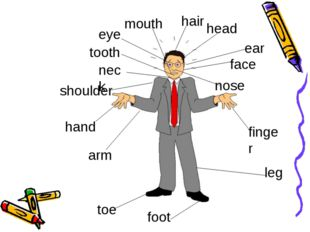 head finger arm foot leg tooth hair mouth toe nose face ear eye shoulder nec