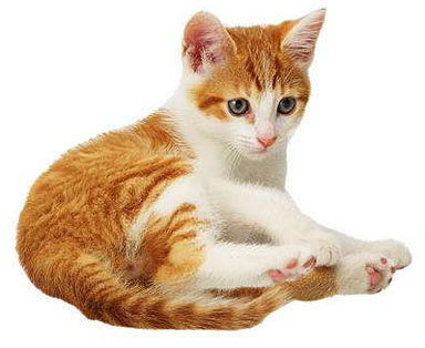 C:\Users\User\Videos\Cat-Collection-domestic-animals-5353362-384-314.jpg