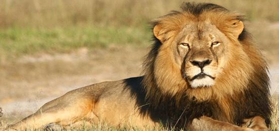 C:\Users\User\Videos\469525-wild-animals.jpg
