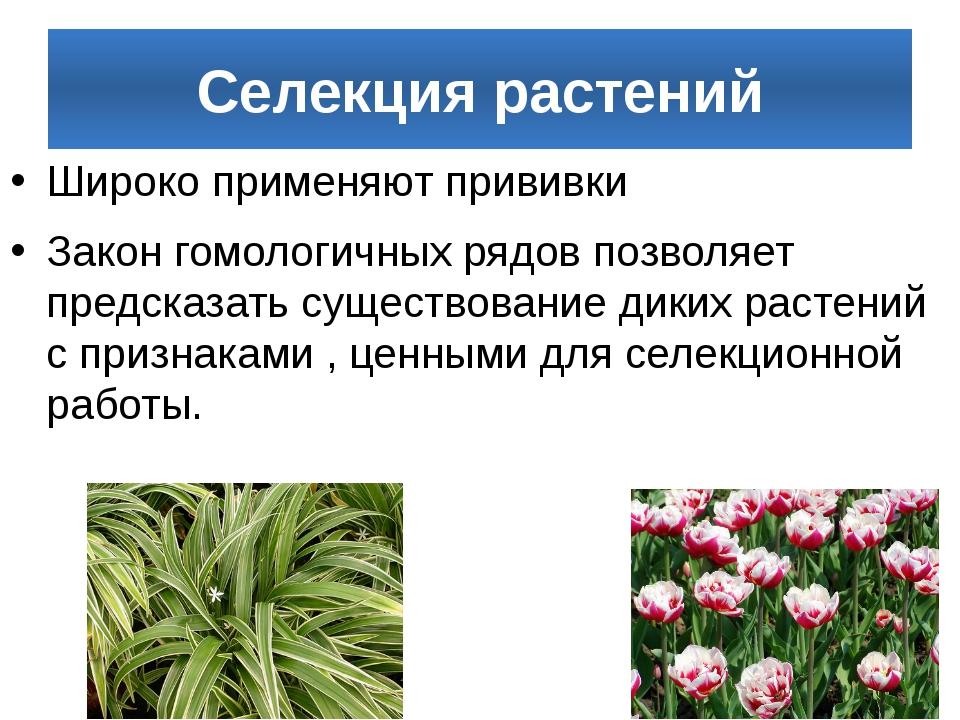 Селекция растений Широко применяют прививки Закон гомологичных рядов позволяе...