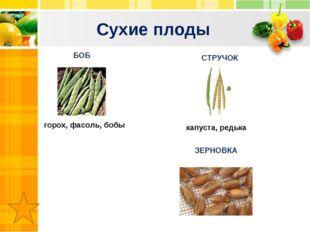 Сухие плоды Text Text Txt БОБ СТРУЧОК горох, фасоль, бобы капуста, редька ЗЕР