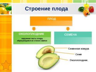 Строение плода наружная часть плода, образующаяся из стенок завязи ПЛОД СЕМЕН