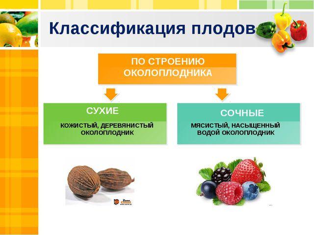 Классификация плодов ПРОСТОЙ ПЛОД, ОБРАЗУЮЩИЙСЯ ИЗ ЦВЕТКА С ОДНИМ ПЕСТИКОМ ПО...