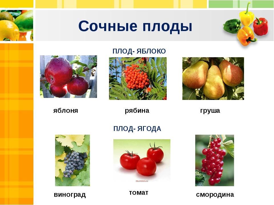 Сочные плоды Text Text Txt ПЛОД- ЯБЛОКО ПЛОД- ЯГОДА смородина томат виноград...