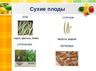 Сухие плоды Text Text Txt БОБ СТРУЧОК горох, фасоль, бобы капуста, редька СТР