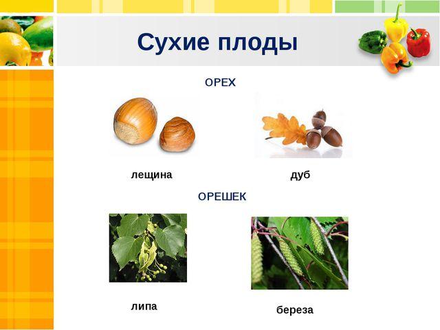 Сухие плоды Text Text Txt ОРЕХ ОРЕШЕК береза липа дуб лещина