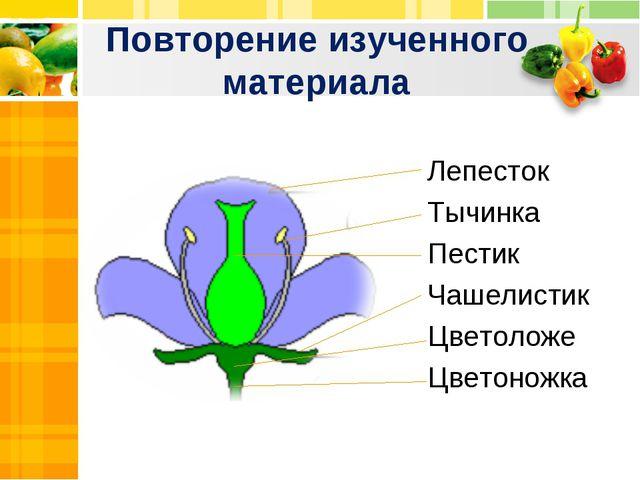 Повторение изученного материала Лепесток Тычинка Пестик Чашелистик Цветоложе...