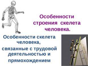 Особенности строения скелета человека. Особенности скелета человека, связанны