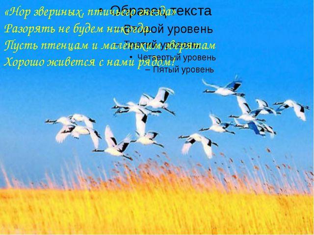 «Нор звериных, птичьего гнезда» Разорять не будем никогда. Пусть птенцам и м...