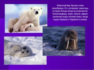 Животный мир Арктики очень своеобразен. Его составляют животные, которые боль