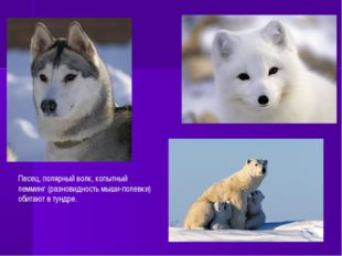 Песец, полярный волк, копытный лемминг (разновидность мыши-полевки) обитают в