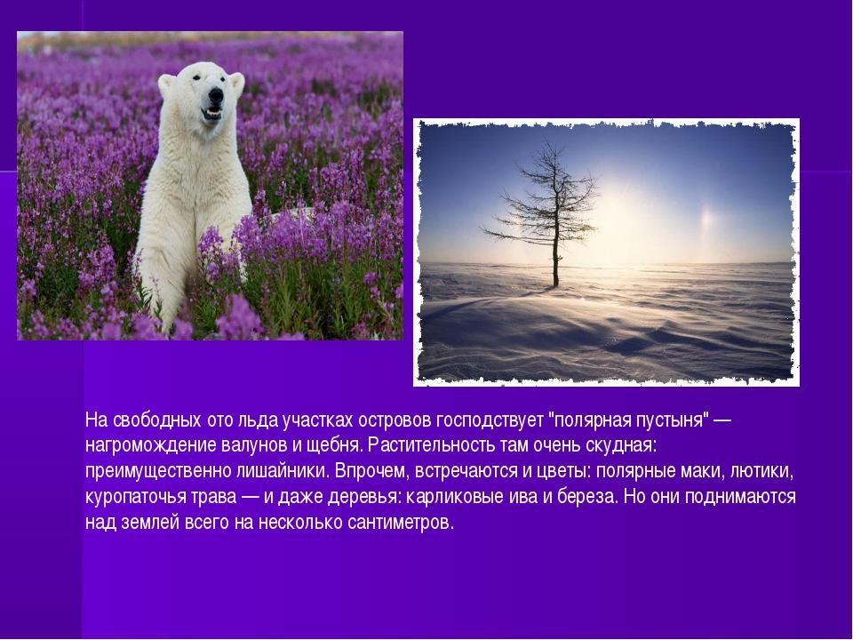 """На свободных ото льда участках островов господствует """"полярная пустыня"""" — наг..."""