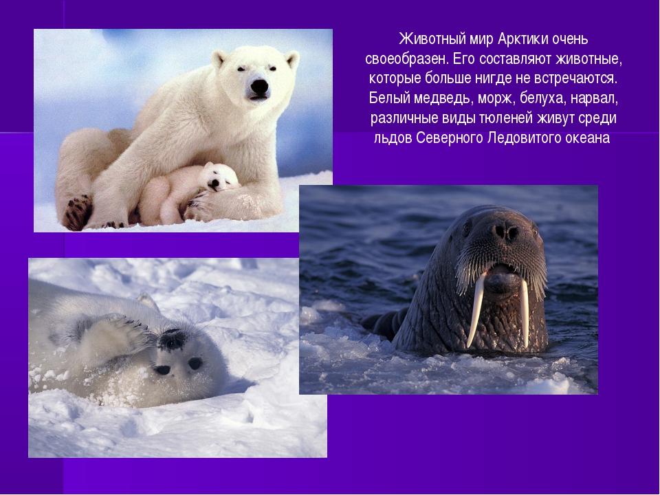 Животный мир Арктики очень своеобразен. Его составляют животные, которые боль...