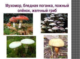 Мухомор, бледная поганка, ложный опёнок, желчный гриб