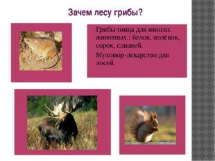 Зачем лесу грибы? Грибы-пища для многих животных.: белок, полёвок, сорок, сл