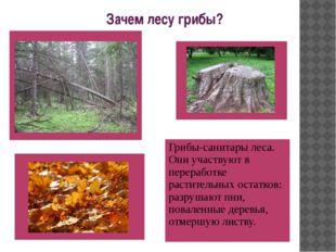 Зачем лесу грибы? Грибы-санитары леса. Они участвуют в переработке раститель