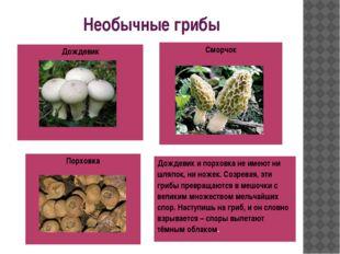 Необычные грибы Сморчок Порховка Дождевик Дождевик ипорховкане имеют ни шляпо