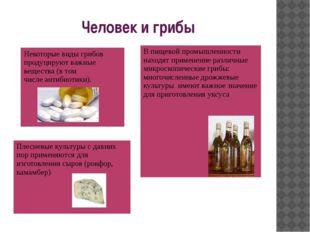 Человек и грибы В пищевой промышленности находят применение различные микроск