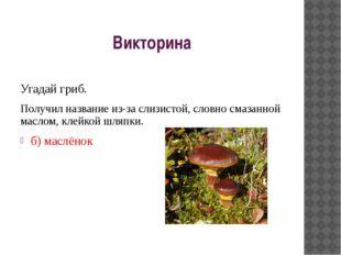 Викторина Угадай гриб. Получил название из-за слизистой, словно смазанной мас