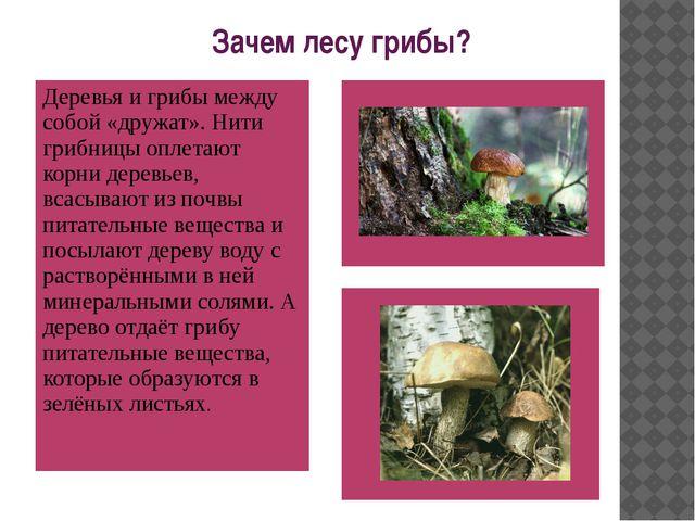 Зачем лесу грибы? Деревья и грибы между собой «дружат». Нити грибницы оплета...