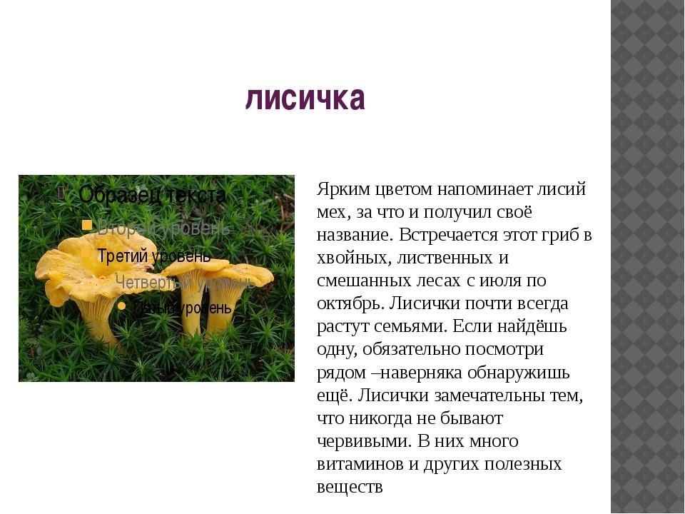 лисичка Ярким цветом напоминает лисий мех, за что и получил своё название. Вс...